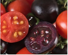 Purple Tomatoes. Image courtesy of the John Innes Website