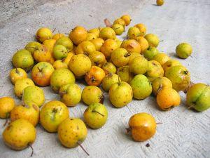 Manzanilla fruits